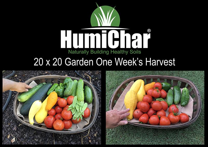 biochar vegetable garden
