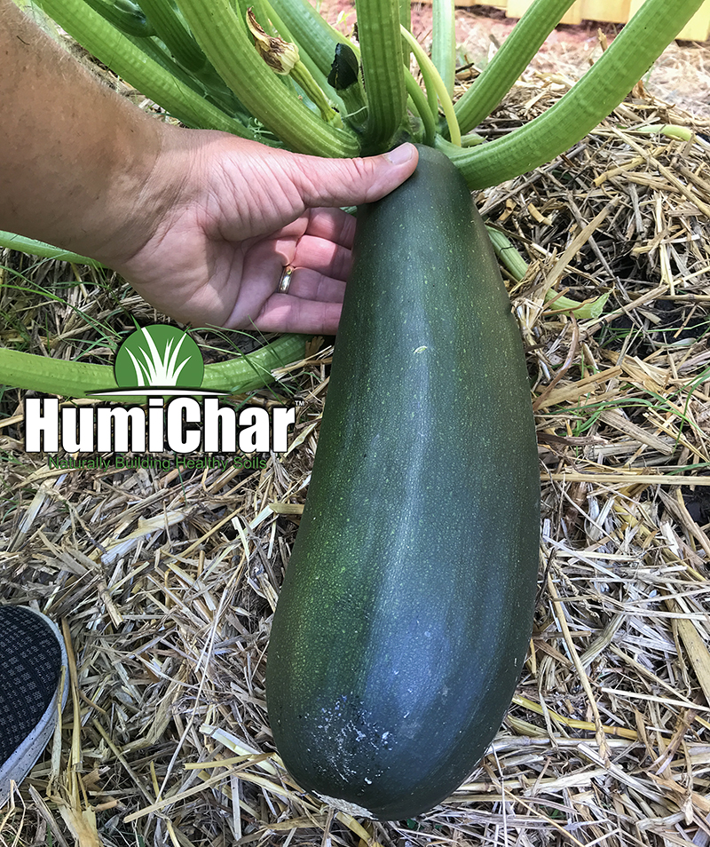humichar grown zucchini